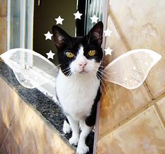 bi anjinho (sosgatinhos) Tags: pet cats love cat furry kitten feline chat kittens gatos gato felino neko shelter katz adoption adoo peludo adote abrigo animalwelfare catlover sosgatinhos