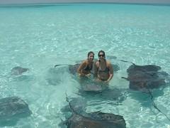 Swimming with Stingrays