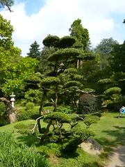 (Stfan) Tags: park france tree garden japanese jardin arbre parc japonais maineetloire cholet taille kohen maulvrier parcorientaldemaulvrier aestheticpruning