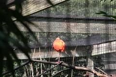 DC Zoo 122 (iamjosh) Tags: dczoo