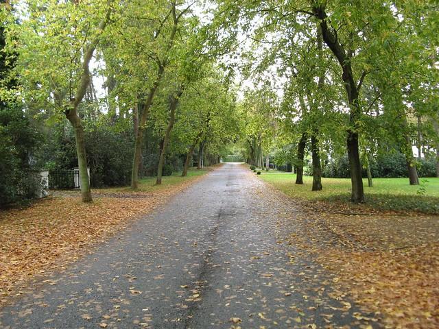 Autumn comes, autumn leafs