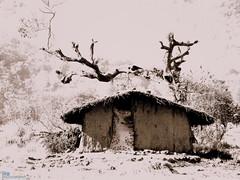 loner (HG rules) Tags: bw house hut loner hutment fujifilms5700 desertedtree