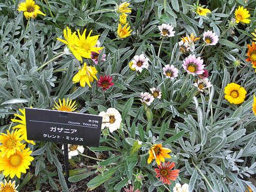 やまと花ごよみ2010@馬見丘陵公園-32