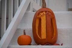 Longcat vs Tacgnol Pumpkin (Day)