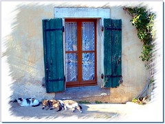 sieste / siesta (OliBac) Tags: window cat chat colorful fentre faade thebigone volet olibac abigfave diamondclassphotographer flickrdiamond superhearts