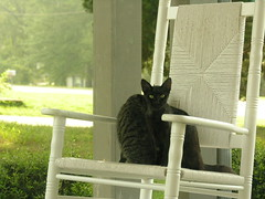 DSCN3214.JPG (lucynfred) Tags: cats nikon frontporch coolpix8800