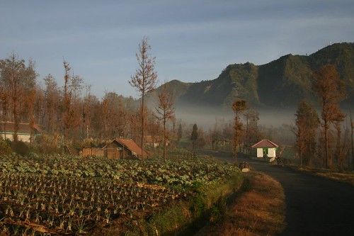 Early morning in Cemoro Lawang...