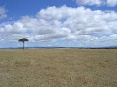 DSCN4629 (lucacolombo1986) Tags: kenya agosto 2007 nel mondo avventure