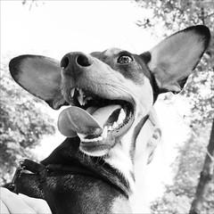 = (kilometro 00) Tags: street italy animal animals cane casa strada italia occhi forza terra amici gatto cavallo amicizia gatti animali animale vita treviso città vivere cani kilometro veneto camminare porfido sguardi comune correre pecora meraviglioso bastardino urbani racconti orecchie mattone udot impressedbeauty superhearts trevision orecchiegrandi vitaanimale kilometrooo