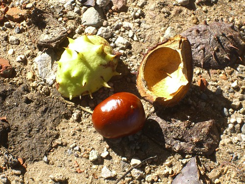Chestnut Pieces