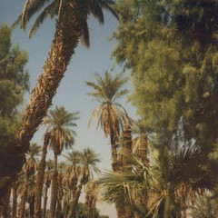 (anna verlet shelton) Tags: deathvalley furnacecreek datepalms