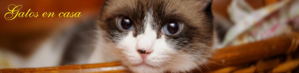 www.gatosencasa.com