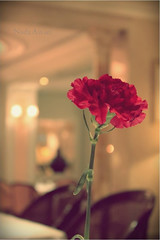 Missed u :( ( NaDa Awari II   ) Tags: red flower canon waiting nada missed 2010       joory