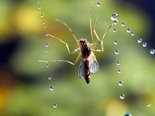 Cobweb closeups
