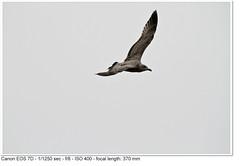 2010_10_09_0867 (John P Norton) Tags: f80 aperturepriority 11250sec canoneos7d 150500mm focallength370mm copyright2010johnnorton