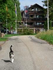 Day 7 006 - Hotel Waldblick, Kniebis (eddiemcfish) Tags: cats germany deutschland lumix panasonic schwarzwald blackforest dmcfz5 reddeertrail