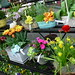 "LI_flowers_April2006 • <a style=""font-size:0.8em;"" href=""https://www.flickr.com/photos/78624443@N00/549693921/"" target=""_blank"">View on Flickr</a>"