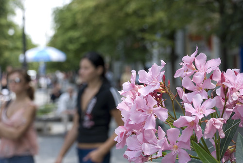На фото садовые цветы