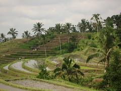 IMG_1683 (jxbfr) Tags: bali ricefields tanahlot balisunsets