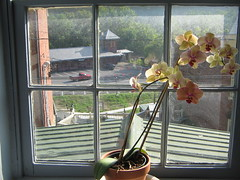 Orchids in Hallway Window