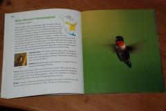 bird book 002