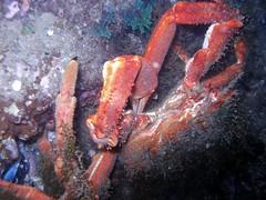 p8031178bisxj4 (coismarbella) Tags: crustaceos