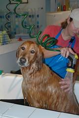 city urban dog chicago water illinois soap bath sunday cities