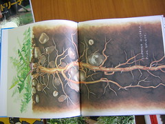 Dandelion book (roots)