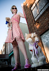 Neighborhood Watch - 9/1/07 (Rob Boudon) Tags: cats cat lol bow ribbon scottishfold leash lioncut lolcats christinadunham jerigarciadunham longhairedscottishfold