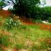 Pedernales Spring