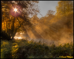 Burst of Sun (PhotographNI - David Milligan) Tags: trees ireland cullybackey national bbc northernireland celtic northern nationaltrust nationalgeographic countyantrim antrim rivermaine hs10 bbcni northernirelandtouristboard bbcnorthernireland picturesofireland digitalireland photographni davidmilligan bbcpictureeditingteam bbceditors bbcpictureeditors