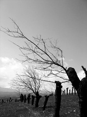 . . . (Ebrahim Baraz) Tags: torghabeh طرقبه baraz براز ebrahimbaraz ابراهیمبراز