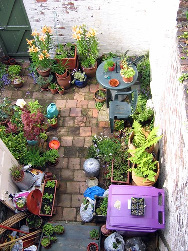 Backyard from above again