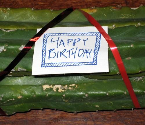 Jaye's birthday cactus 2