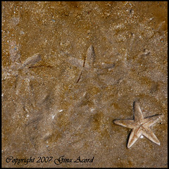 catch a falling star (earthwoman1967) Tags: summer beach nature water fun star sand nikon texas starfish falling lovelovelove padreisland gulfcoast nationalseashore naturesfinest wowiekazowie allnicethink popsgallery
