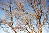 Kahle Bäume im Winter