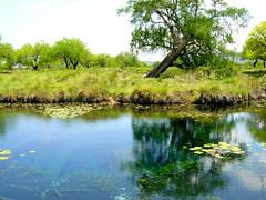 Los Peroles - Rioverde SLP México 2004