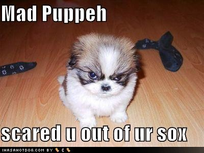 funny dog pictures. funny-dog-pictures-mad-puppeh