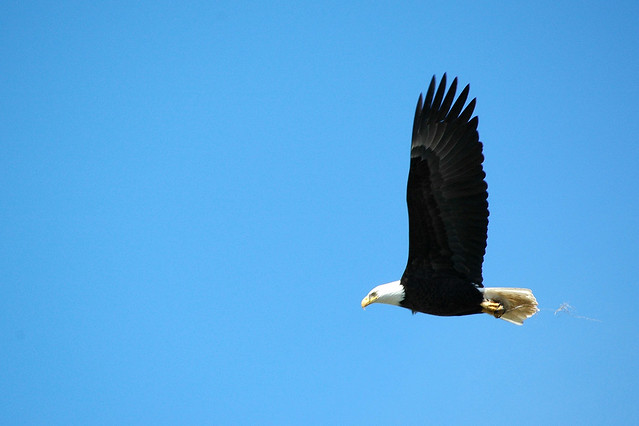 fly like an eagle 2