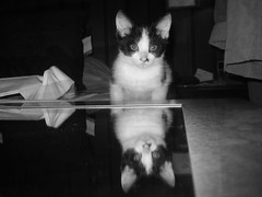 The cat on the mirror