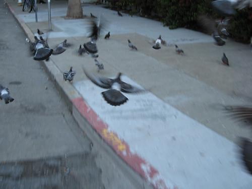 Sky Rats