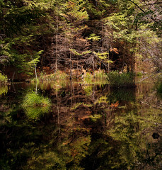 Forest Reflected (Jamie Amodeo) Tags: camping trees ontario canada nature water glass leaves reflections bravo north olympus hike camper e500 silentlake supershot magicdonkey evolt500 artlibre anawesomeshot impressedbeauty diamondclassphotographer