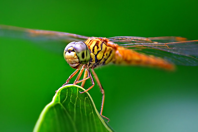 Amazing Examples of Insects Photography