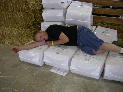 Asleep in the hay