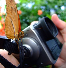 Butterfly on Camera of Chris (mikeyexists) Tags: camera flowers flower macro butterfly photography photo pittsburgh dof photograph phipps phippsconservatory flickrhearts whiletakingpictures
