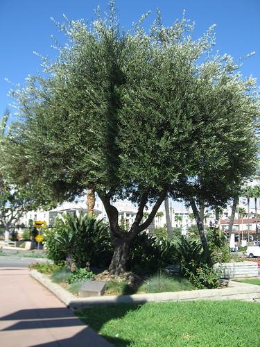 Leo Politi Tree