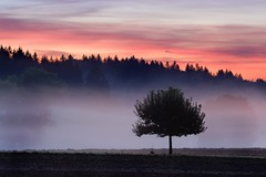 crack of dawn (Mace2000) Tags: morning trees light mist nature colors field fog clouds sunrise germany print landscape deutschland 350d dawn natur karlsruhe landschaft hdr dcm mace2000 stupferich countryscenery poty2007 2img7597