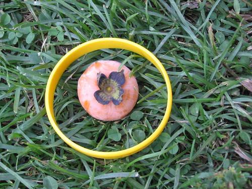 Fallen persimmon