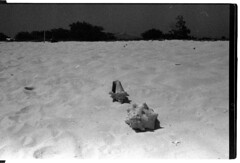 muscheln (nomade at the busstop) Tags: bw dog white black los venezuela caracas perro tortuga roques comedor