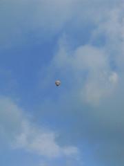 081231 039 (Futoshi ) Tags: balloon hana